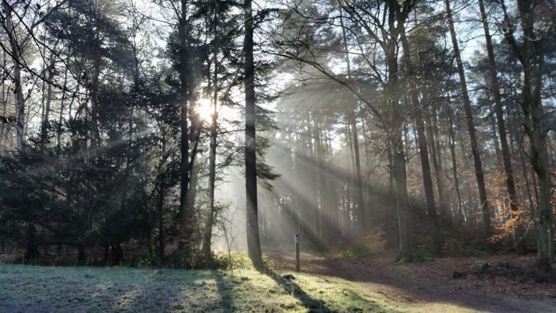BCP-winter-woodland