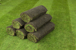q-lawns-rolls-250-px-wide