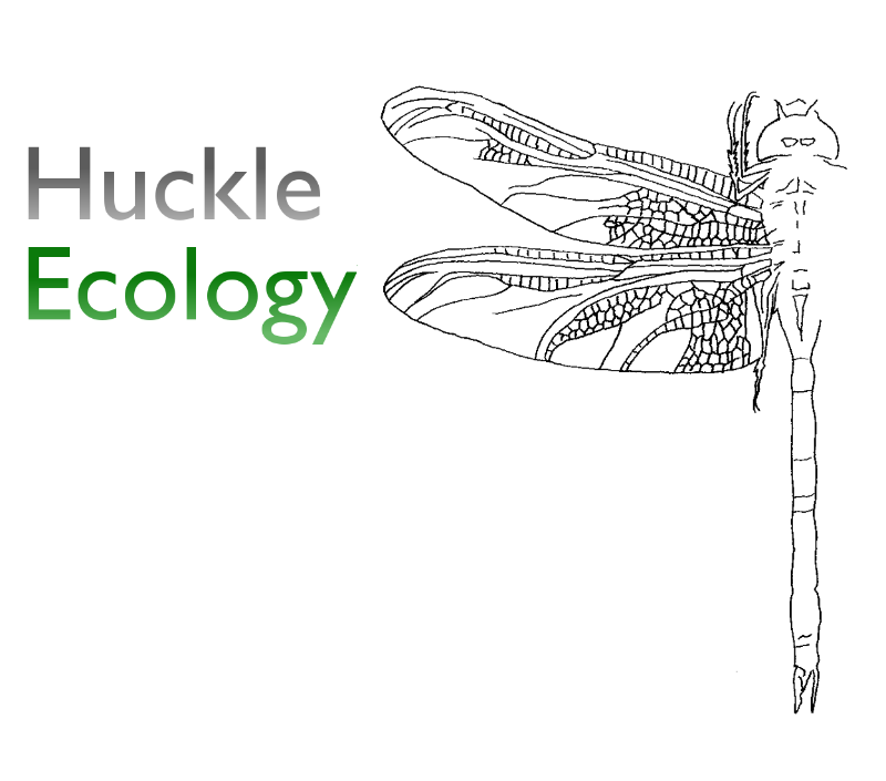 Huckle Ecology
