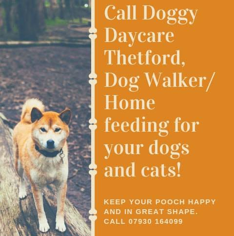 Doggy Daycare Thetford