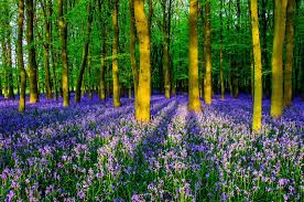 bluebells-light-heart-meditation-and-mindfulness